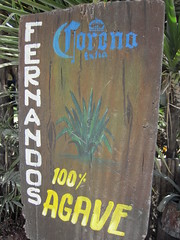 Fernando's 100% Agave, Majahual