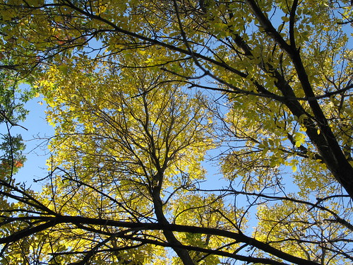 Two Weeks Before Snowfall, Minneapolis, Minnesota, October 2008, photo © 2008 by QuoinMonkey. All rights reserved.