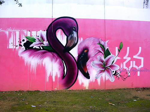 Flamencos rosas.