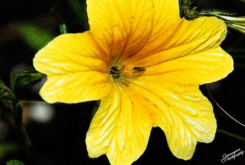 yellowflowerfresco