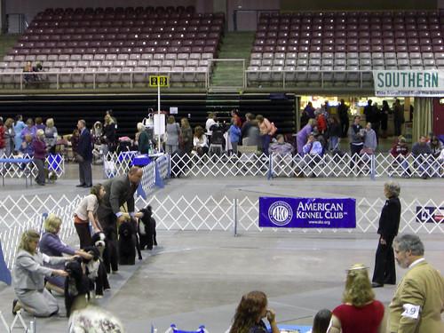 Dog Show - Pueblo border=