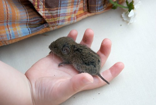Muis, gered