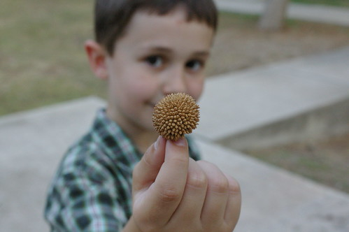 seedpods in Turkey by you.