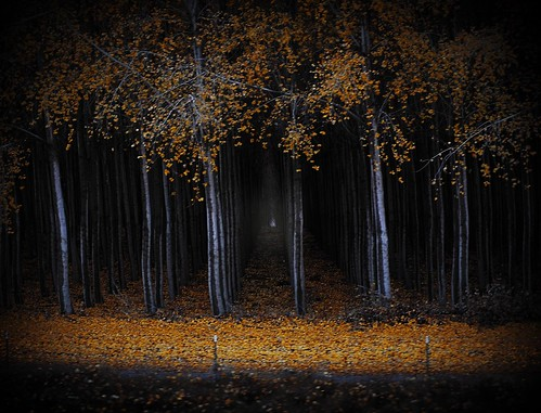 spooky tree tunnel 2