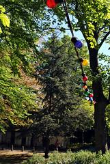 Light bulbs in trees 1