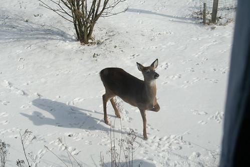 Three-Legged Deer