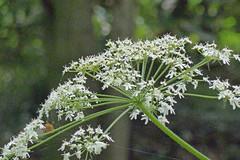 泉の森の花(Flower, Izuminomori park, Yamato, Kanagawa, Japan)