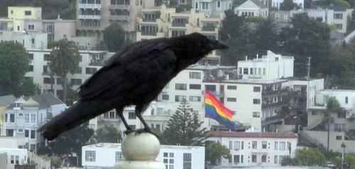 d64_raven