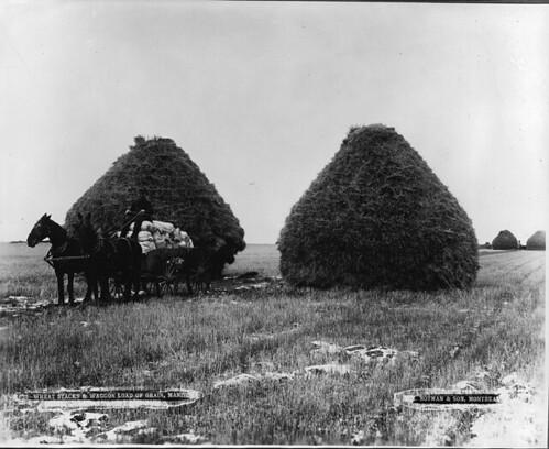Wheat stacks and wagon load of grain, Portage La Prairie, MB, 1887