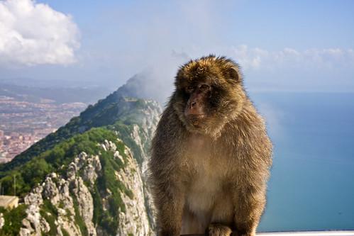 Rock'n'Monkey