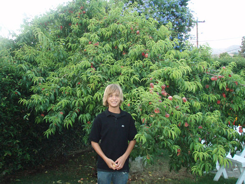 Chace in front of the peach tree