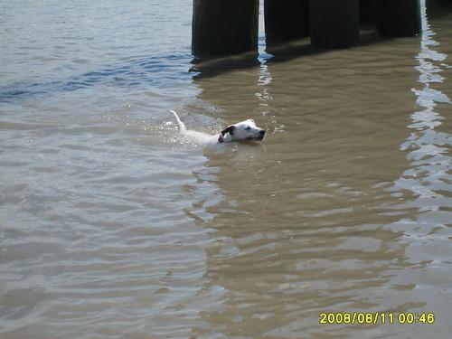 SPUD swimming