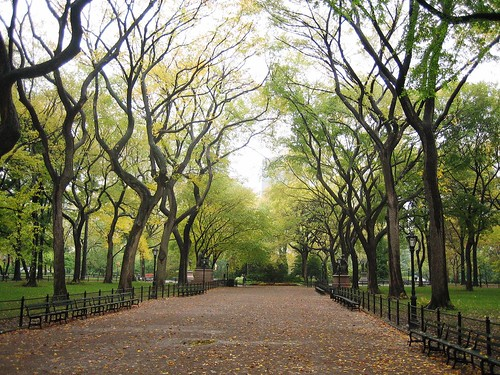 the estate of things chooses central park in fall
