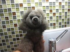Tahoe Bear in the kitchen