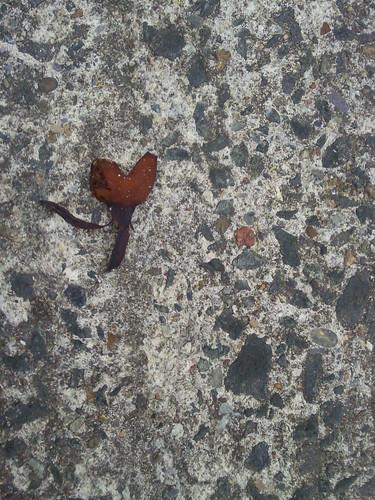250611 seaweed heart by Geekhearts a day