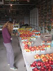 Kilcherman's Antique Apples