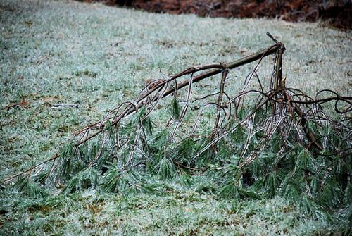 December Ice Storm 7