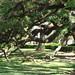 Oak Alley Plantation 02