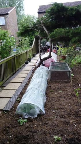 dad's veg garden