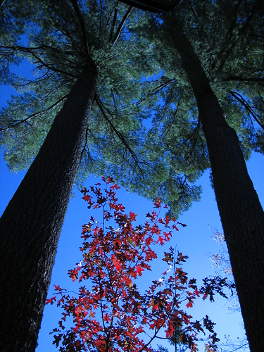 Two Pines