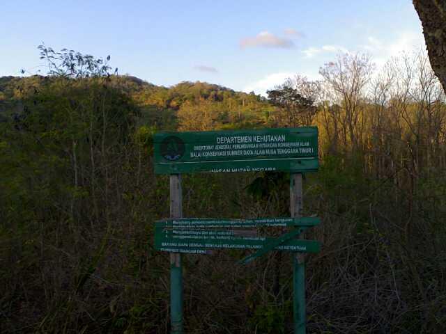 Foto Hutan Lindung
