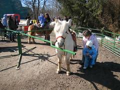The Pony rides.