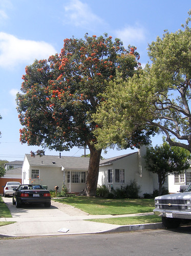 House, car, tree