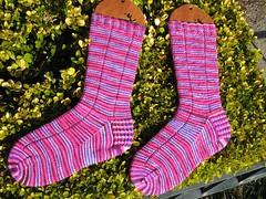 Socks_2009_01_12_Rockstar1