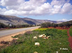 Countryside in Syria