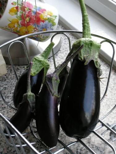 eggplant1415