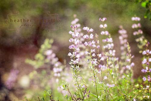 wildflowers 3 texture WM