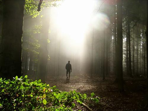Light Walk in October