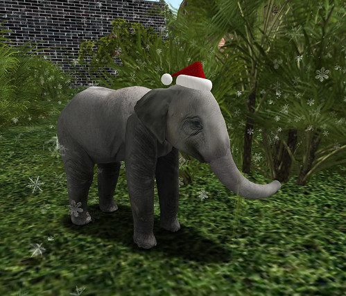 Santa Elephant at The Jungle 12-12-2008