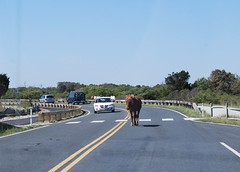 Horse in the Road