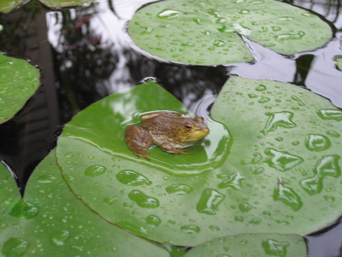 We have a frog!