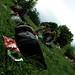 Siestes Sonores @ Jardins de la Visitation [Sleeping] (Lyon, France)