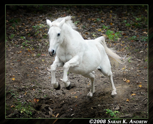 The Fairy Princess Pony Leaps Through the Enchanted Forest...