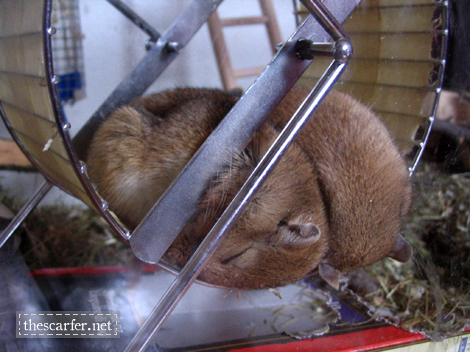 Snoozing on the wheel...
