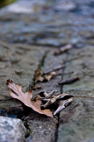 Fallen Leaves On A Stone Wall