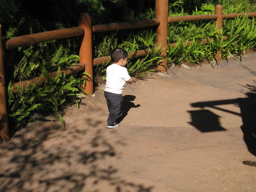 Our first stop was the Redwood Creek Challenge Trail, because Emmett loves to run around there.
