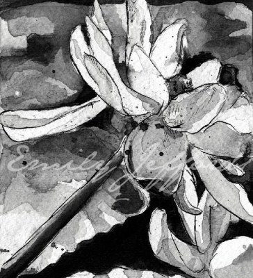 waterflower III drawing Emily Jeffords