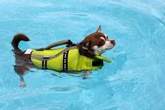 Coco Doggie Paddling by xena2542