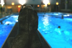 Können Wiesel schwimmen?