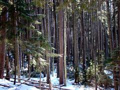 Sunny Wood