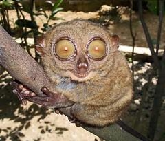 big eyes4s