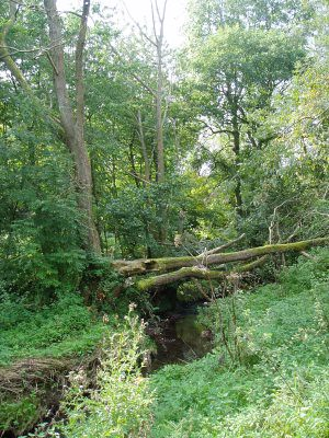 fallen trees in a country park near where Mum and Dad live - taken by Mum