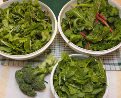 Hill Street Farm CSA Week 4