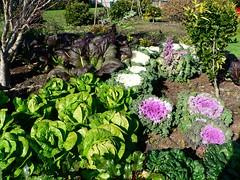 Auckland Botanical Gardens, Manukau, Auckland,...