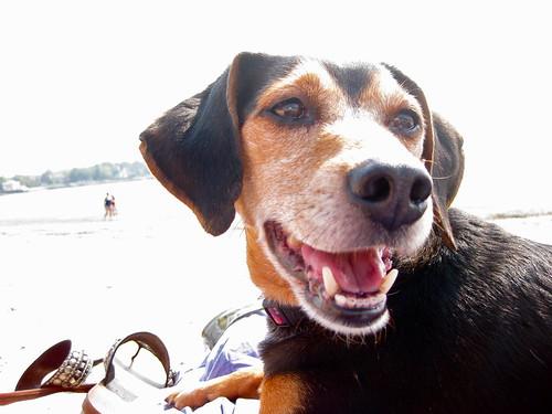 Sam at the beach