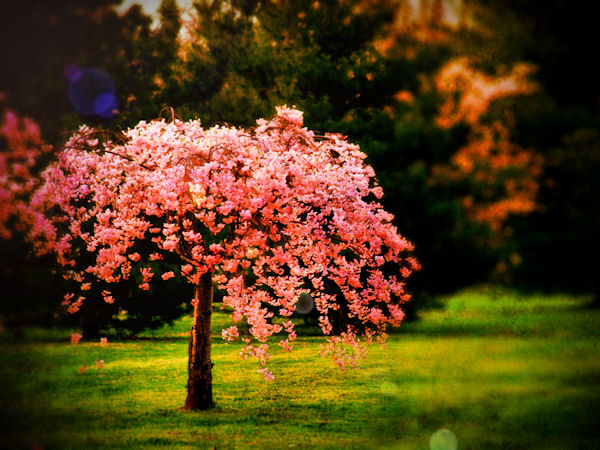 :: plant a hope ::